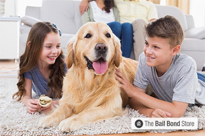Domesticated Animals: Household Pets